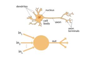 Neurônios e Neurônios Artificiais